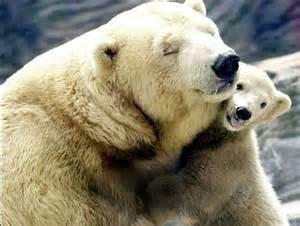 おやすみなさい!お母さんの愛を感じる白熊母子