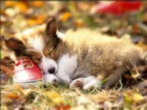おやすみなさい!怖い夢から覚めてほしい