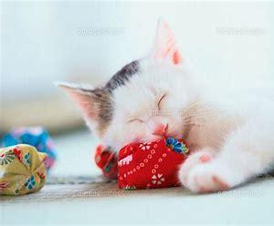 おやすみなさい!かまって欲しいが止まらない