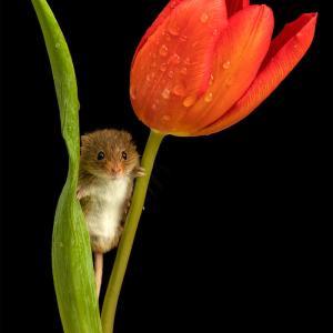 おやすみなさい!きっと花は咲く