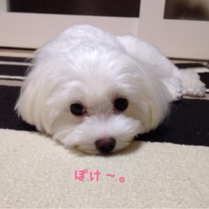しーたんごはん♡〜2015.8.4&5〜