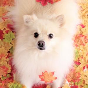 秋の写真撮影☆