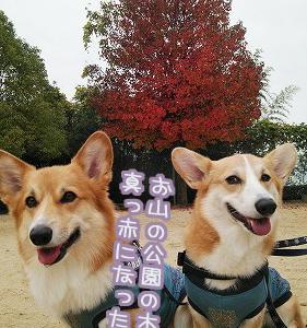 公園の秋☆