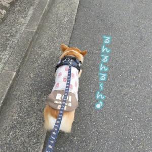 久しぶりに神社散歩☆