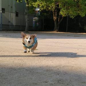 晴れた朝散歩は~