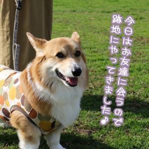ワン友ワラワララ~☆その壱☆