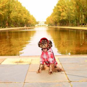 紅葉散歩♪前田森林公園