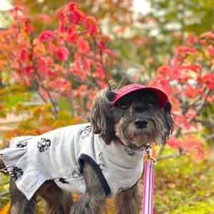 秋のいろいろ