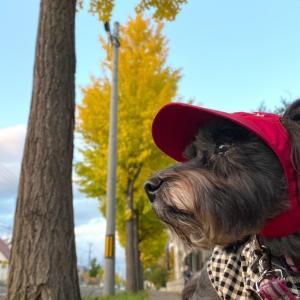秋のお楽しみ散歩♪