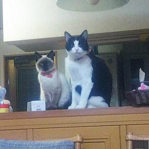 ネコの、ふーちゃんと、ちーの仲は・・・