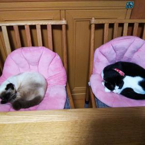 緊急事態宣言で、やがみ家の猫は・・・