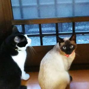 コロナ禍の猫達