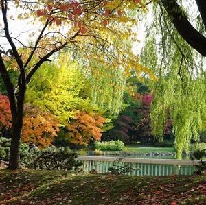中島公園の紅葉が見事です(2019-10-24)