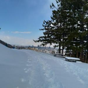 旭山記念公園で野鳥観察
