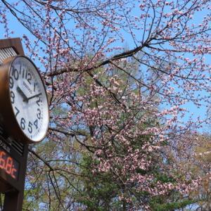 円山公園でエゾリスに遭遇