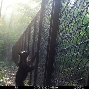札幌は、もう熊が出没しています