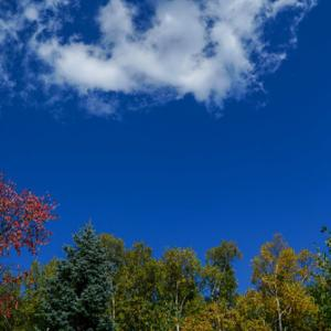 札幌、旭山記念公園の紅葉が進んでいます