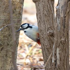 茨戸川緑地、その外の鳥