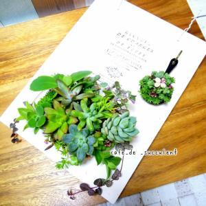 受講生さん 多肉植物寄せ植え作品  ☆  多肉植物 寄せ植え 教室 フラワー 千葉 埼玉 東京