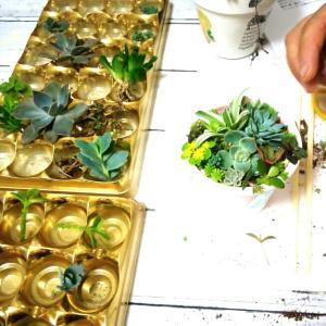 受講生さんの多肉植物寄寄せ植えのご紹介です。多肉植物教室 千葉 埼玉 神奈川 東京