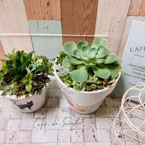 受講生さんの多肉植物リースのご紹介です。多肉植物教室 千葉 埼玉 神奈川 東京