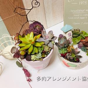 受講生さんの多肉寄せ植え作品のご紹介です。多肉植物教室 千葉 埼玉 神奈川 東京 関東