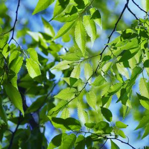 色彩メンタルヘルス、緑色のパワーは?