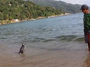 8000Kmも渡り毎年会いに来るペンギン !!!