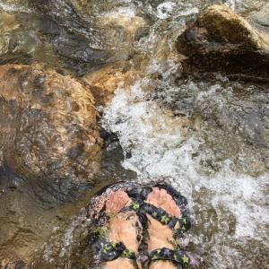 今日の住吉川は水量多めです