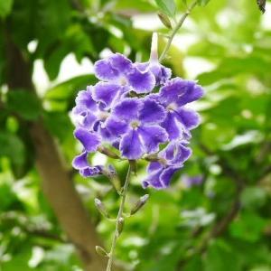 聖書のイザヤ書:エホバは常にあなたを導き、乾き切った土地も潤っている庭園のようになる♪