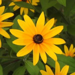 ヒメヒマワリの花とアルストロメリアの花🎵