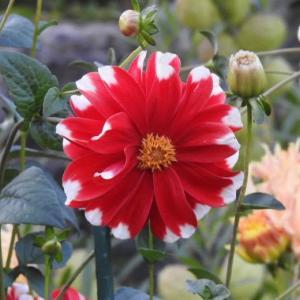 鮮やかなダリアの花と第2回宇和島美術協会展の作品(その3)♪
