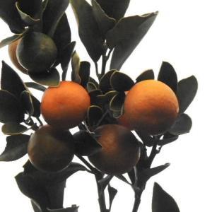 柑橘キンカンの実と万両の実♪