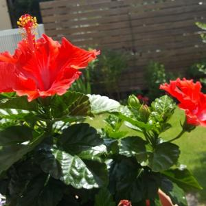 我が家のお庭にも夏が来た!(^^)!