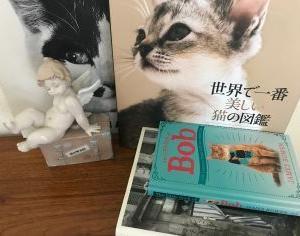ボブという名の猫に感動の日