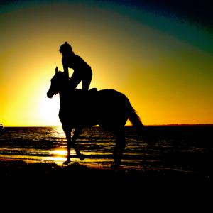 川崎記念2020枠順と過去のデータから予想ポイント考察、出走馬診断