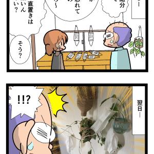 不思議なものが実る観葉植物 2133