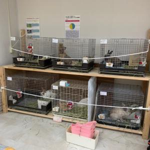 第二種動物取扱業について