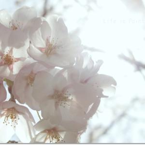 4月に咲くから