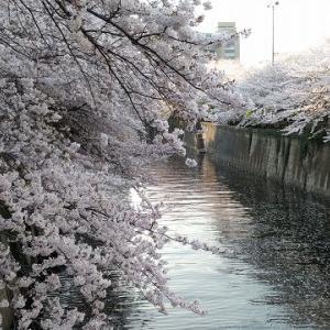 目黒川沿い桜並木