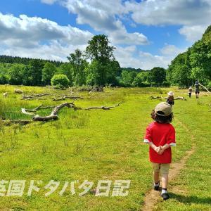 週末のお散歩(後編):お茶の時間に来た馬達&今日の家庭学習