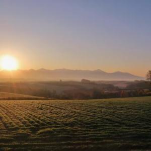 美瑛の丘に朝霧