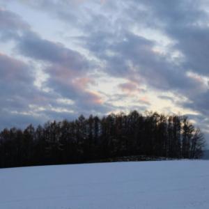 美瑛の丘の冬景色