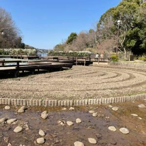 予算常任委員会補正予算 寺ヶ池公園のウッドデッキ改築  #河内長野市