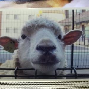 手仕事サロンで羊作りと己書幸座