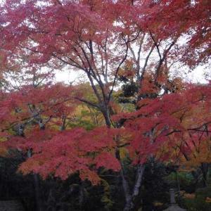 東京の地下神殿が台風19号で活躍する。