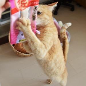 mumuさんのお店がOPEN +.゚(´▽`人)゚+.゚オメデトウ!!