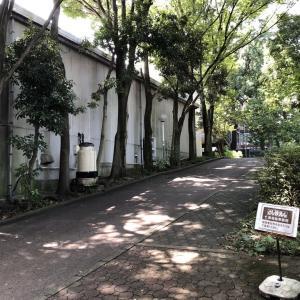樹木保存に関する西武鉄道さんとの協議(報告)