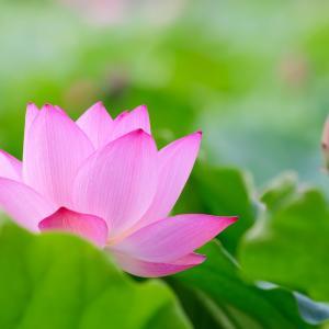 ● 花は自身の場所で静かに堂々と、純粋な思いのままに咲いている