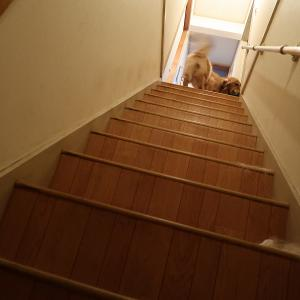 天国からの階段!!地獄へまっしぐら(╥ω╥`)
